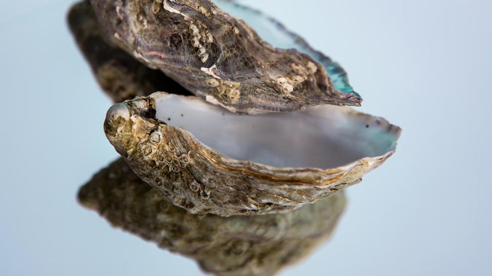 Muschel-Omega3 Fettsäuren